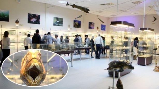 İzmir'de ilk yaşanarak Deniz canlıları merkezi açıldı