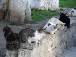 Tüm Servetini Vasiyetinde belirttiği gibi Sokak Kedilerine Harcanacak