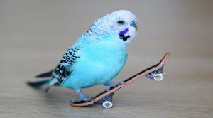 Muhabbet Kuşu Ve Eğitimi